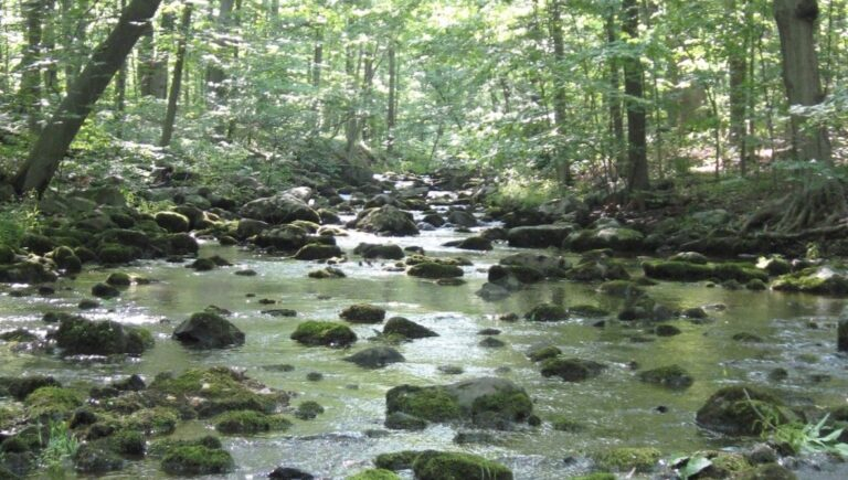 The wetlands and woodlands of the Upper Tohickon Creek watershed are near the proposed quarry site in Springfield, Bucks County. (Courtesy pf the Upper Tohickon Watershed Association)