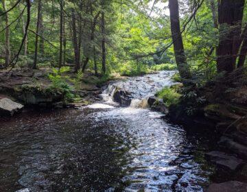 The east branch of Wallenpaupack Creek runs through Promised Land State Park in Pike County. (Rachel McDevitt/StateImpact Pennsylvania)
