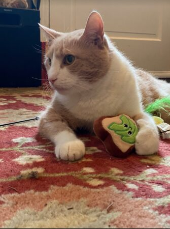 Peppy sits on the floor with a toy