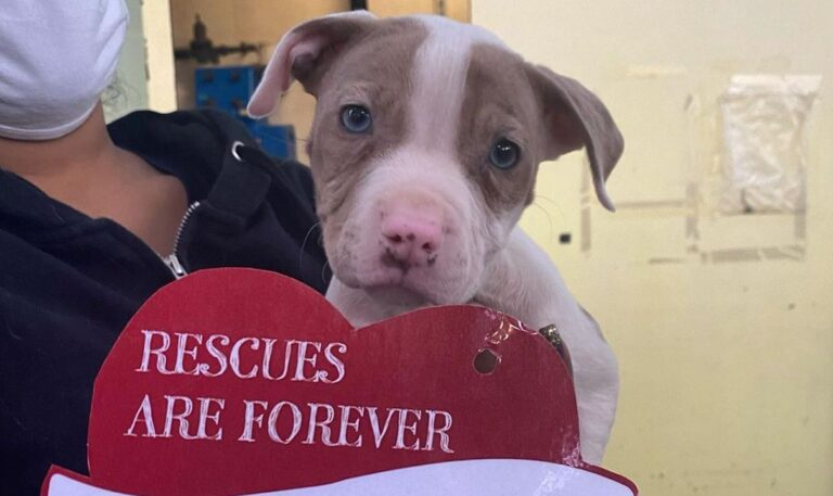 A PSPCA worker holds a cute puppy and his valentine