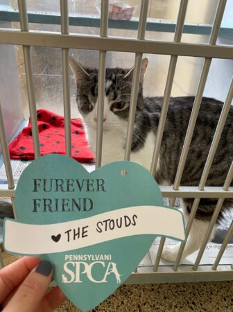 A kitty stares at a valentine from their kennel.
