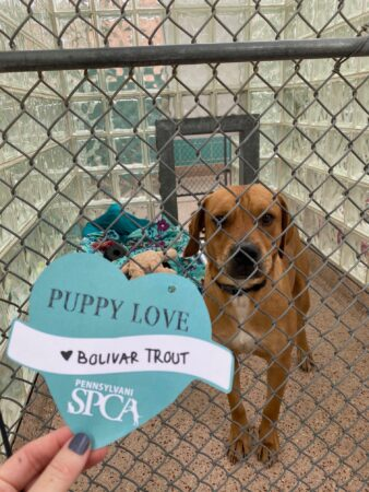 A pup poses next to a valentine in their kennel.