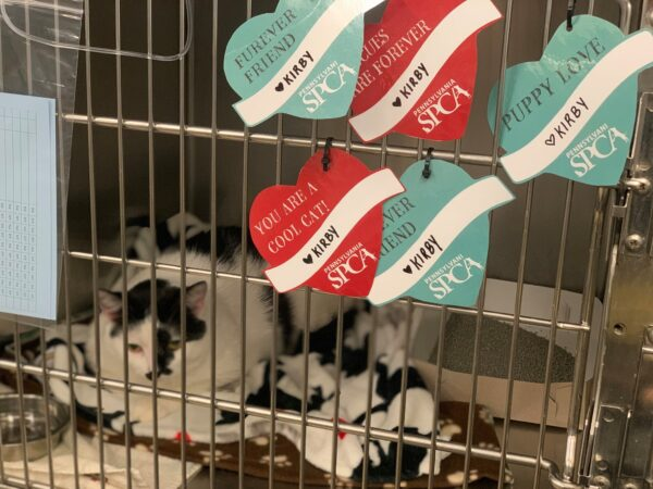 Chucky sits in a kennel with valentines fixed to the front