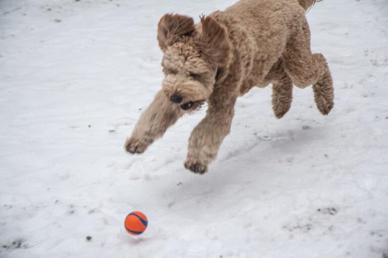 Jones pounces a ball at Rittenhouse Square.