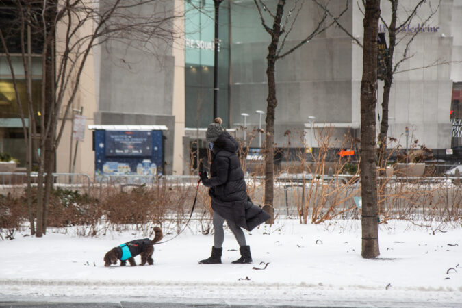A person walks their dog in Center City after the snowfall
