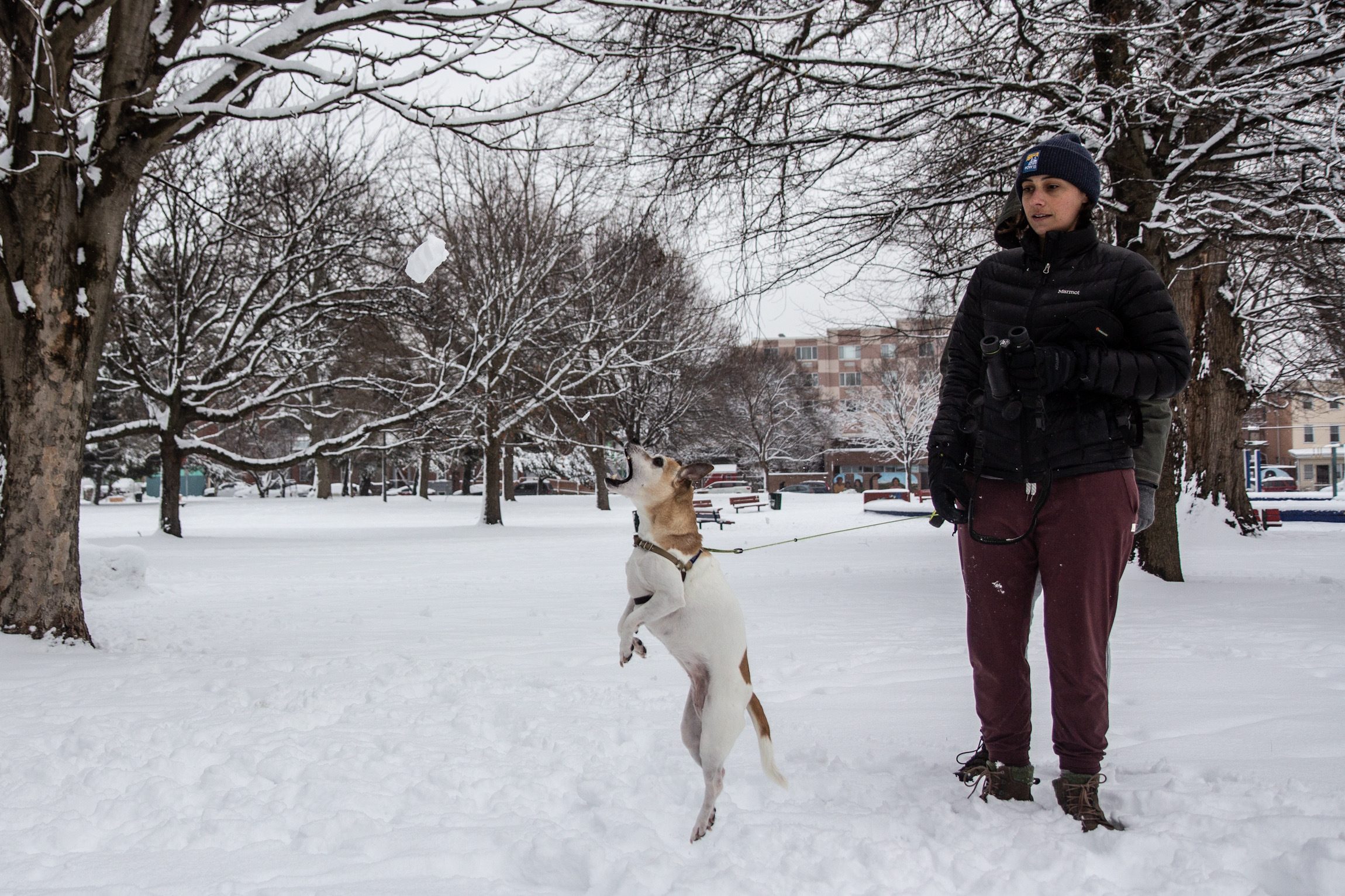 Joey lunges for a snowball at Norris Square Park