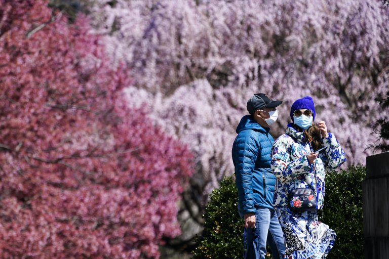 People wearing face masks walk past blossoming trees