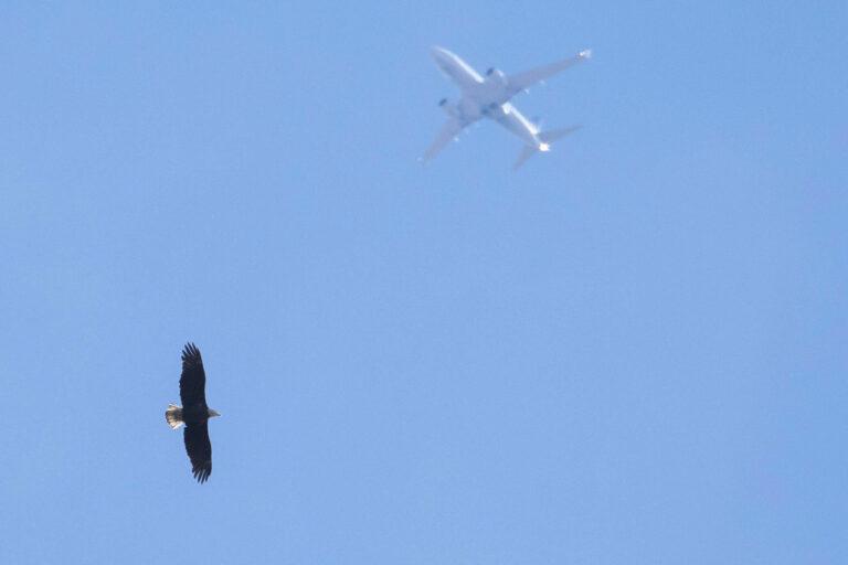 A bald eagle was seen at Shortridge Memorial Park in Wynnewood. (Courtesy of Jason Weckstein)