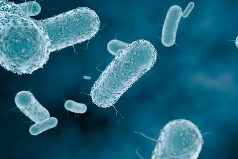 Close-up of virus cells or bacteria