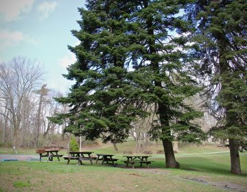 A picnic area at Ridley Creek State Park in Delaware County, Pa. (Emma Lee/WHYY)