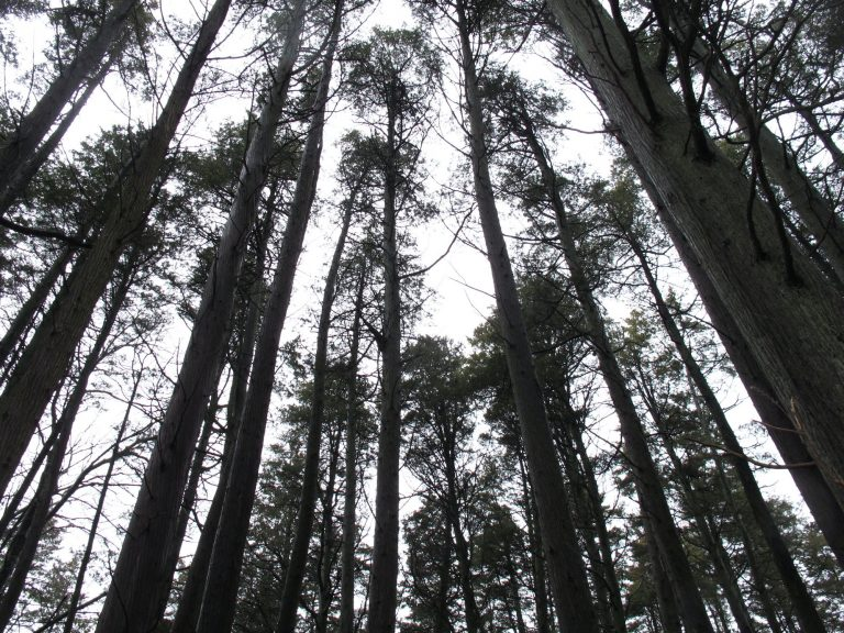 A look through the trees in New Jersey's Pinelands