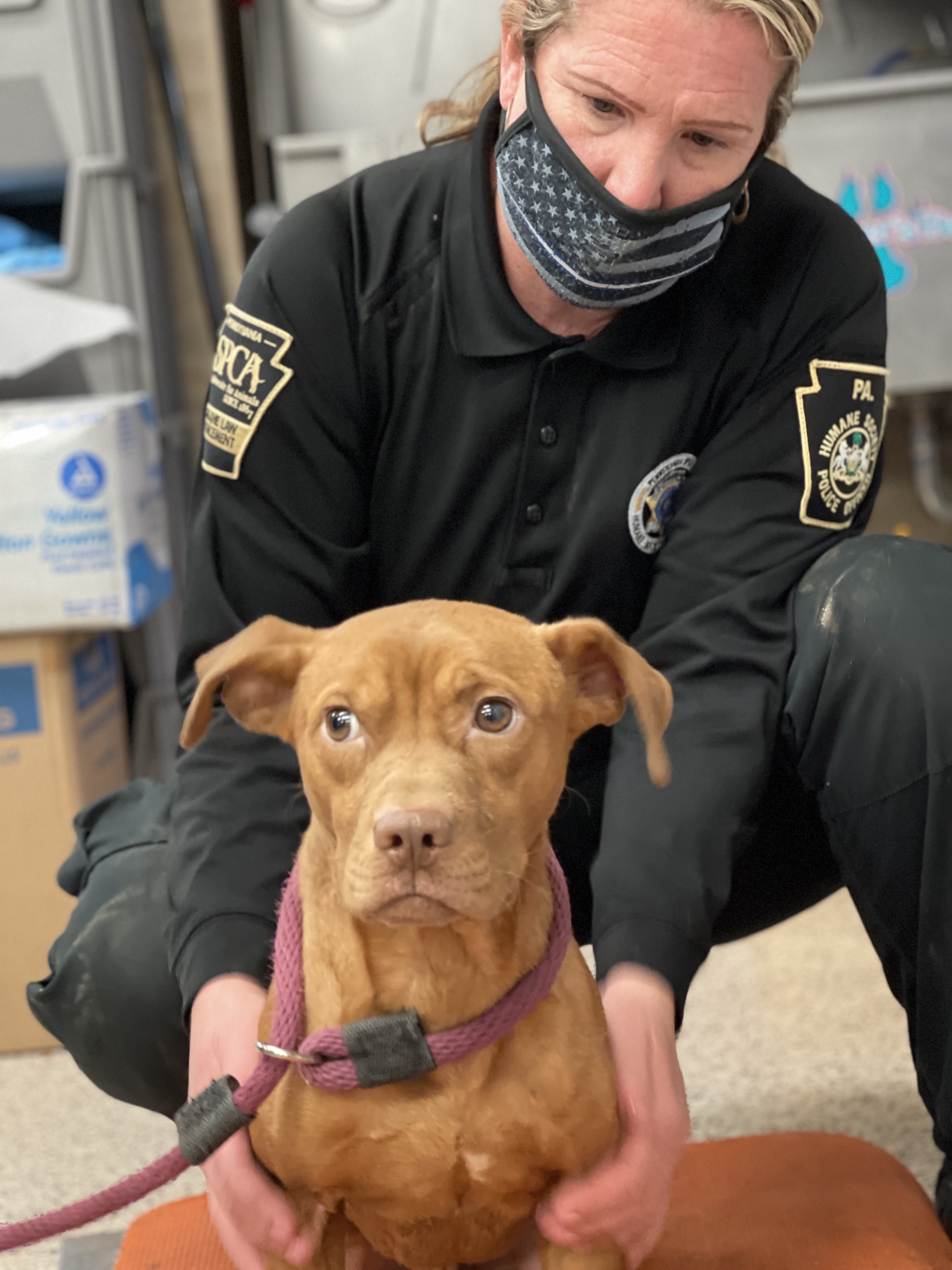 A Humane Law Enforcement Officer sits with a dog rescued from a suspected dogfighting ring.