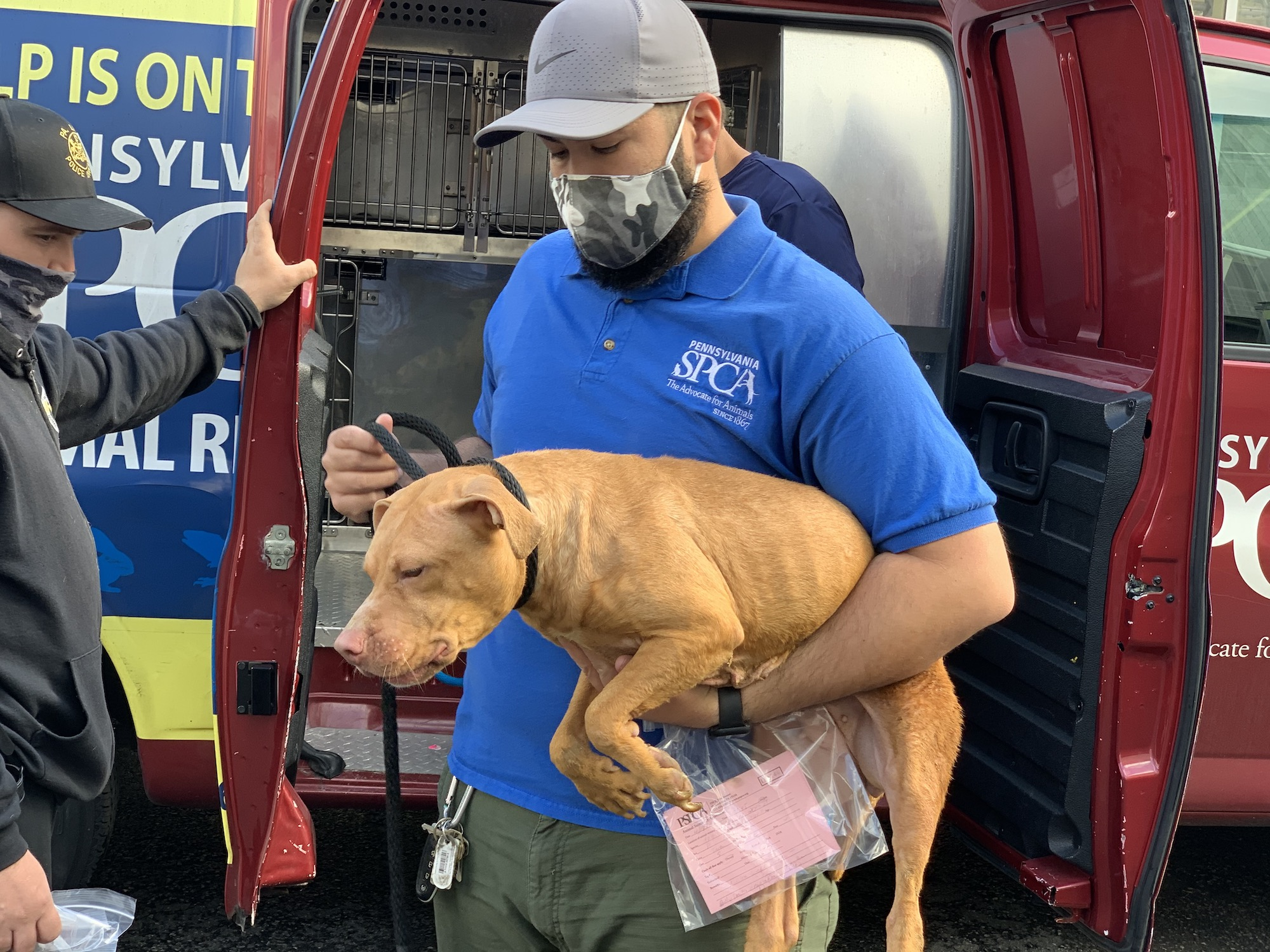 A PSPCA worker transports Sorbet the dog