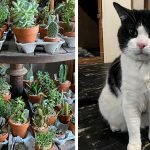 Left: Plants are pictured at Urban Jungle Philly; Right: Silver the cat is pictured in a foster home