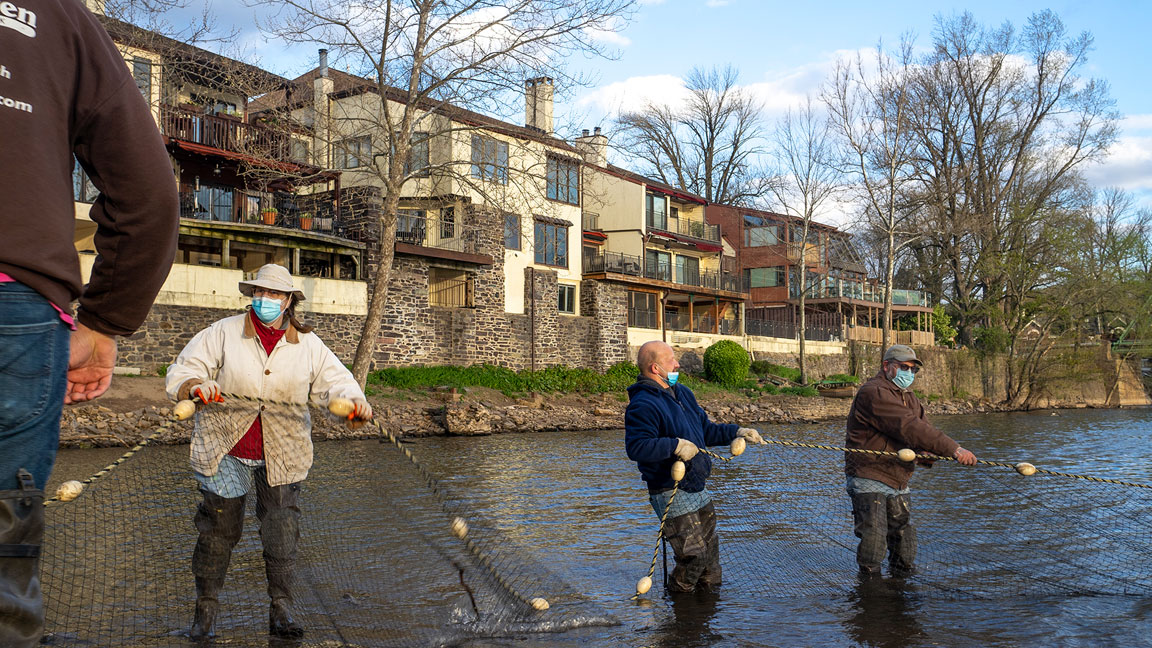 Longtime volunteer and resident Lewis Fishery historian, Charlie Groth (left), joins in on the haul.