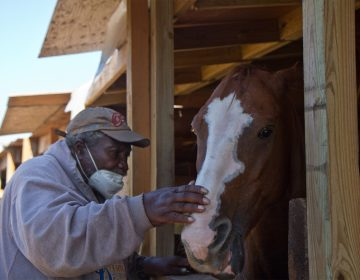 "Ellis Ferrell, 81, founder of the Fletcher Street Urban Riding Club, feeds a mint to a horse called ""El Dog."