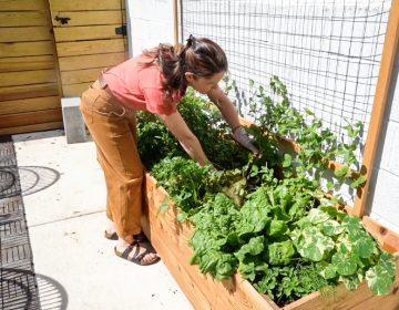 A woman tending to a garden box outside