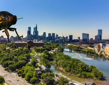Cicadas loom large over Philly in illustration form