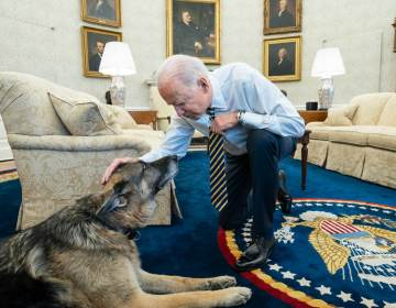 President Biden pets the Biden family dog Champ in the Oval Office in February. On Saturday, Joe and Jill Biden announced that Champ had died. (Adam Schultz/White House)