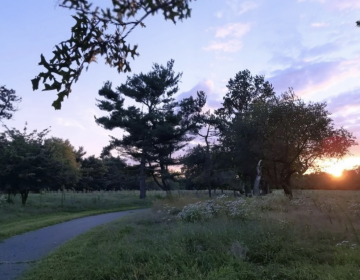Philadelphia's World Cup host committee pitched transforming this natural space seen in a 2020 file photo into a professional soccer facility for use by World Cup teams. (Friends of FDR Park)