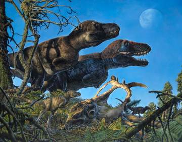 An illustration shows a pair of adult tyrannosaurs and their young living in the Arctic during the Cretaceous Period. (James Havens /Courtesy University of Alaska Fairbanks)