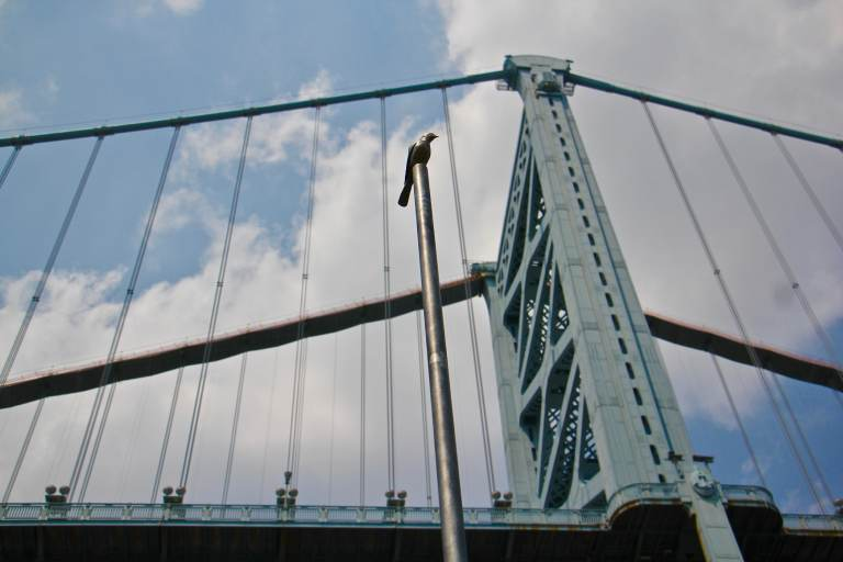 A tall pole is topped with a bronze bird as part of an art installation by the Ben Franklin Bridge