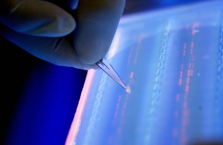 A lab officer cuts a DNA fragment under UV light