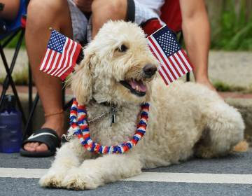 Dogs and cats can be particularly sensitive to loud noises such as fireworks. Here, a dog watches an Independence Day parade in Takoma Park, Md., in 2013. (Mandel Ngan /AFP via Getty Images)