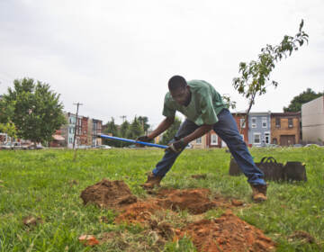 Garrison Hines plants fruit trees at a lot on the 1900 block of Norris Street in Philadelphia.