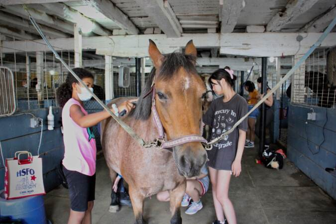 Students at Music and Mindfulness camp at Fox Crossing stables groom horses