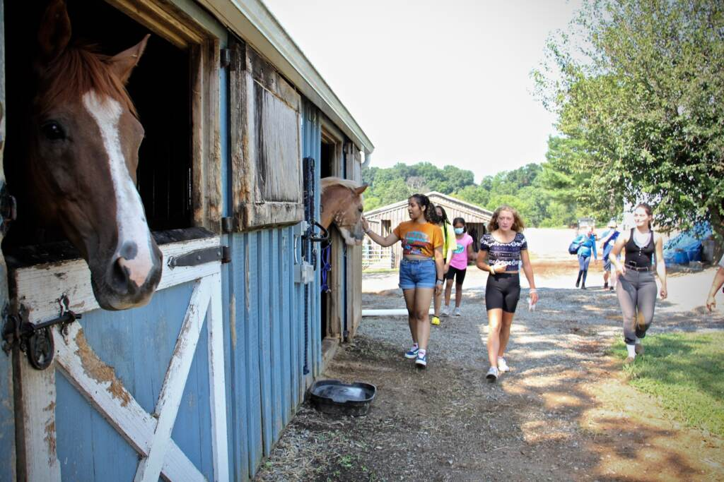 A horse is pictured in their stable, with students visible in the background