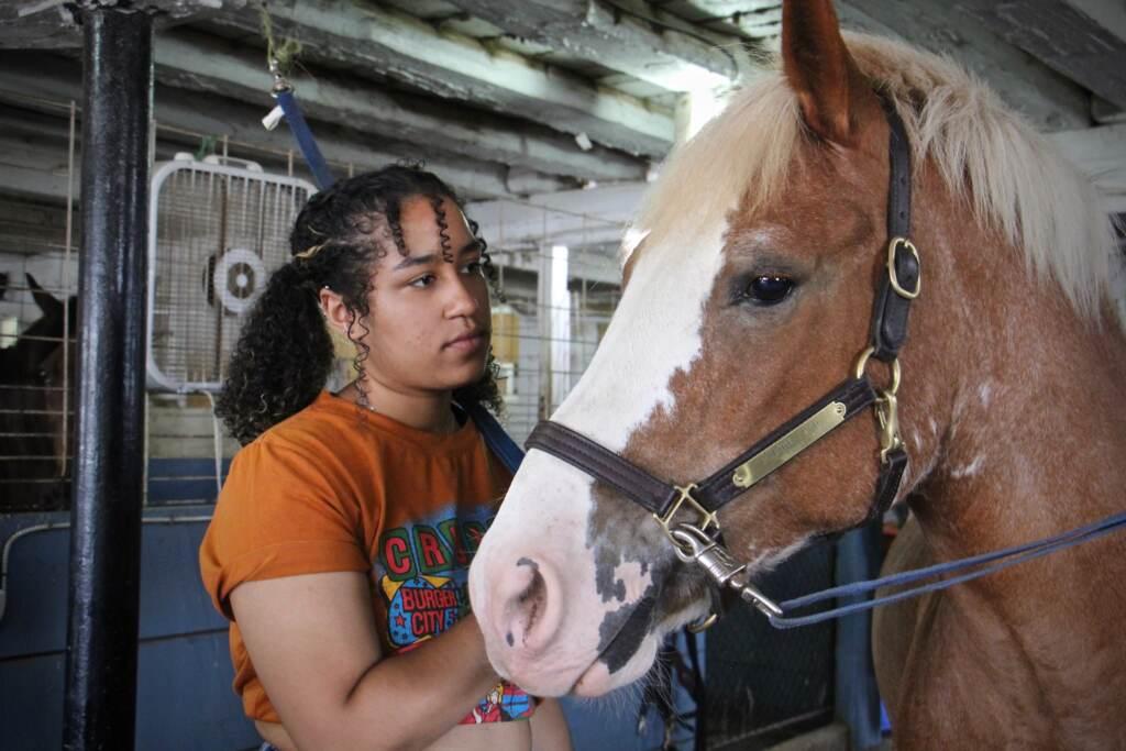 Sarah Cassanova grooms a horse