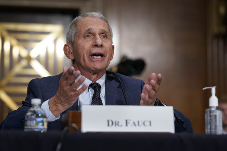 Dr. Anthony Fauci testifies before the Senate