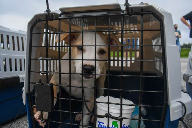 A dog stands inside a crate post-evacuation flight