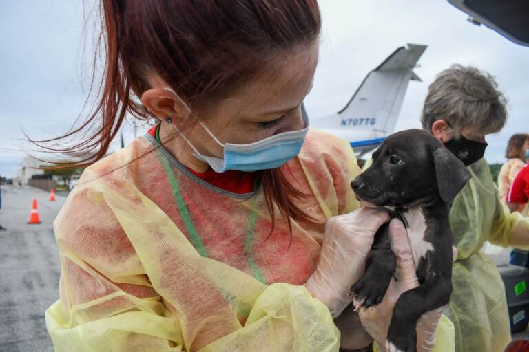 A volunteer wearing a face mask holds up a puppy