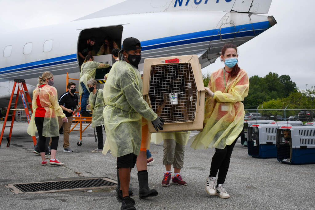 Two volunteers hold a dog crate post-evacuation flight
