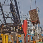 A 2000 pound crate of clams is lifted out of the Mary B. Each at Dockside Packing in Atlantic City, N.J. (Kimberly Paynter/WHYY)