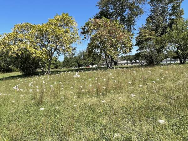 The Spiral Cemetery at the Delaware Psychiatric Center had been neglected until a decade ago. (Cris Barrish/WHYY)