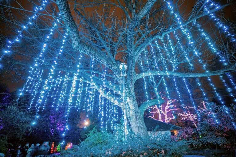 LumiNature light show