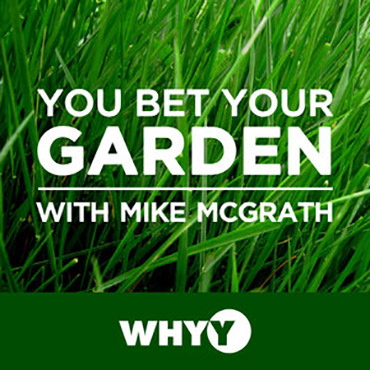 Join host Mike McGrath as he slays slugs, defeats deer, whacks weeds, and saves plants every week on You Bet Your Garden - a fiercely organic and sometimes (OK - frequently) wild and crazy island of highly accurate and family-safe gardening information.