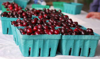 Fresh cherries at the 2011 Oxford Circle Farmers Market. It and the Frankford Farmers Market opened last year. Photo/Ben Bergman