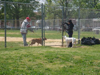 Lawncrest dog owner Kris Cheung (right) takes her dog to the unofficial dog park in Lawncrest. Photo/Maryline Dossou