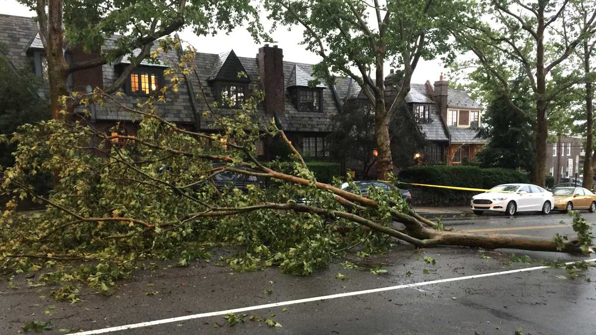 Downed Trees in East Falls/Brian Hickey, WHYY