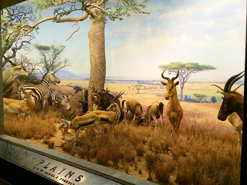 Plains diorama Akeley Hall of African Mammals, American Museum of Natural History