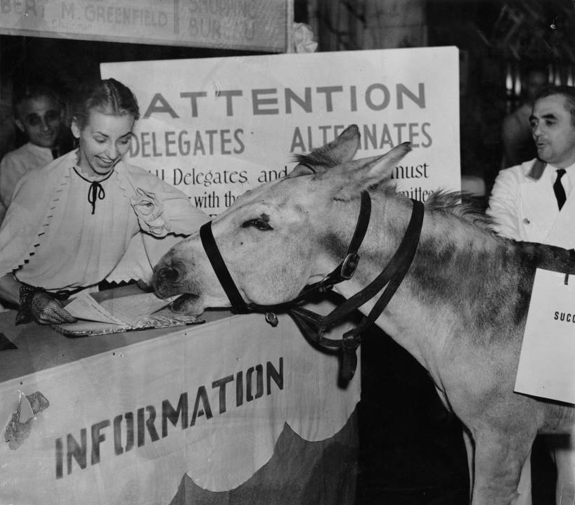 Democratic Donkey greeted at 1936 convention as it eats information desk paperwork. | Special Collections Research Center, Temple University Libraries, Philadelphia, PA