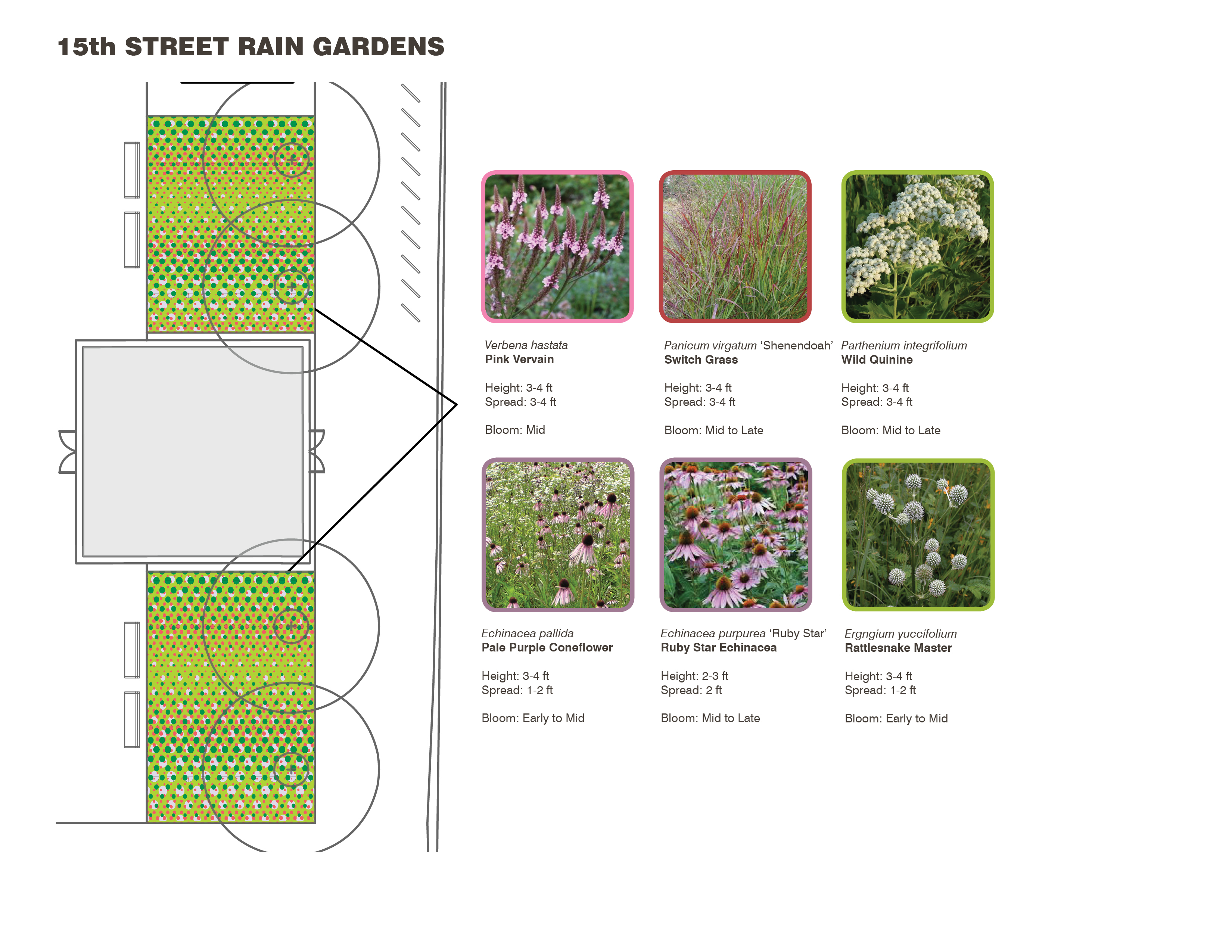 Rain Garden planting plan of LOVE Park / JFK Plaza, October 2015 | Hargreaves
