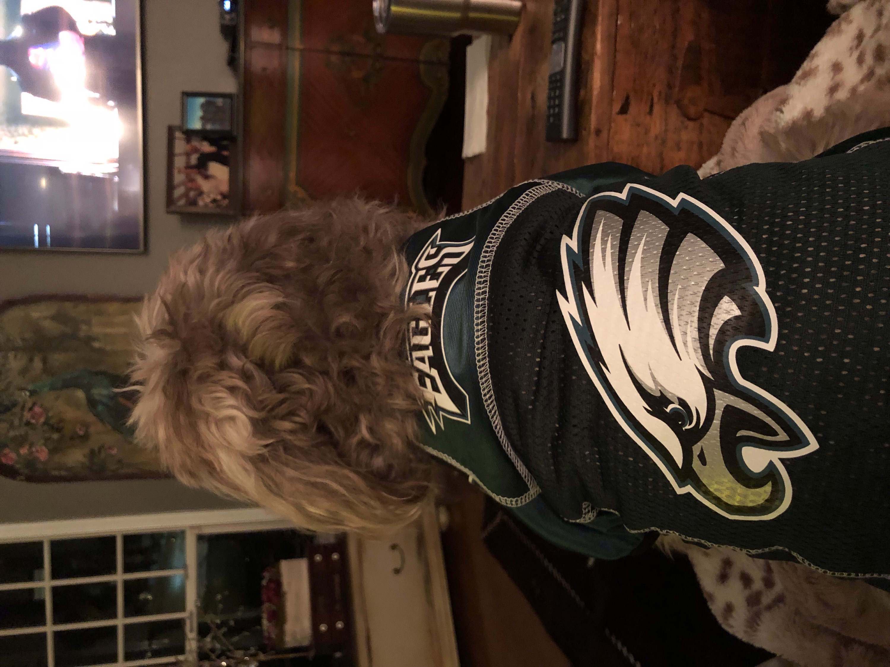 Eagles underdog Ella D'ambrosia is READY. Credit: Queenie's Pets