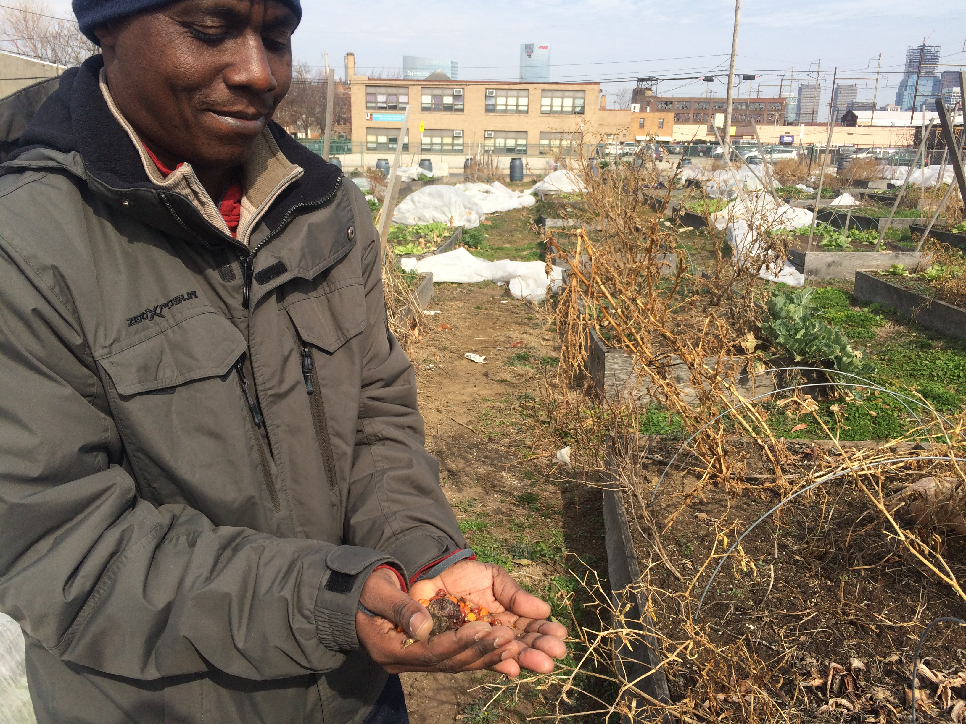 Merthus Mbonigaba at the Growing Together farm in South Philadelphia. | Catalina Jaramillo / WHYY