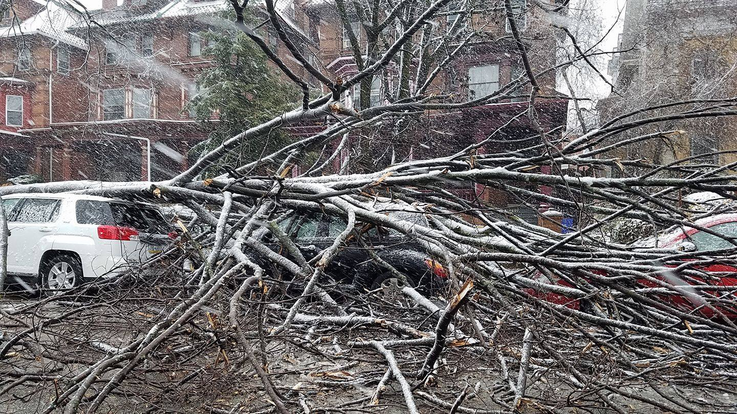 Nor'easter winds send a tree branch in West Philly into three parked cars. Credit: Romana Lee-Akiyama