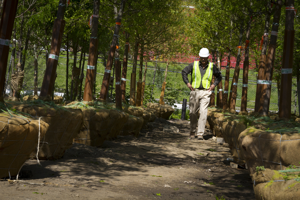 Senior Project Manager Mark Breitenbach inspects trees that are now planted at Penn